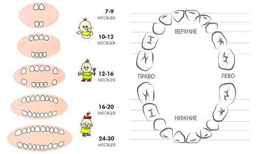 Зубы у детей порядок прорезывания