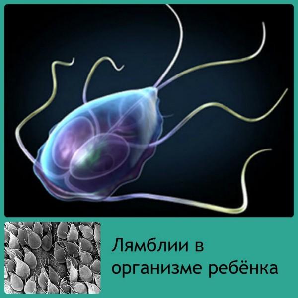 немозол от паразитов в организме